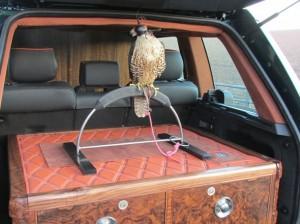 Falconry 001